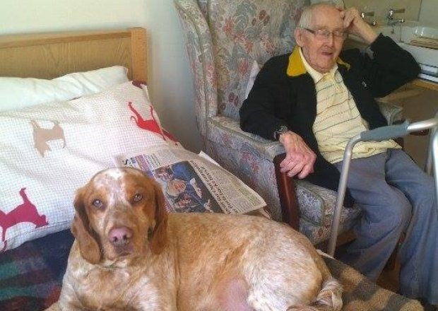 In the Press: 'Give a dog a care home' says charity