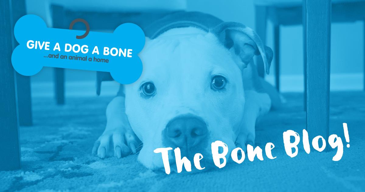 The Bone Blog