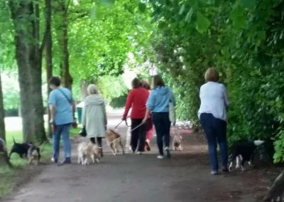 Give a Dog a Bone…and an animal a home - Group Dog Walk