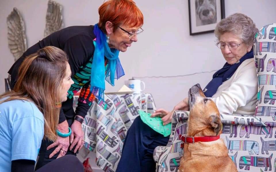We support the over 60s to afford a rescue pet companion - tackling loneliness for the individual and homelessness for the animal.