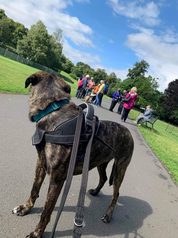 Give a Dog a Bone and an animal a home | Dog Walk
